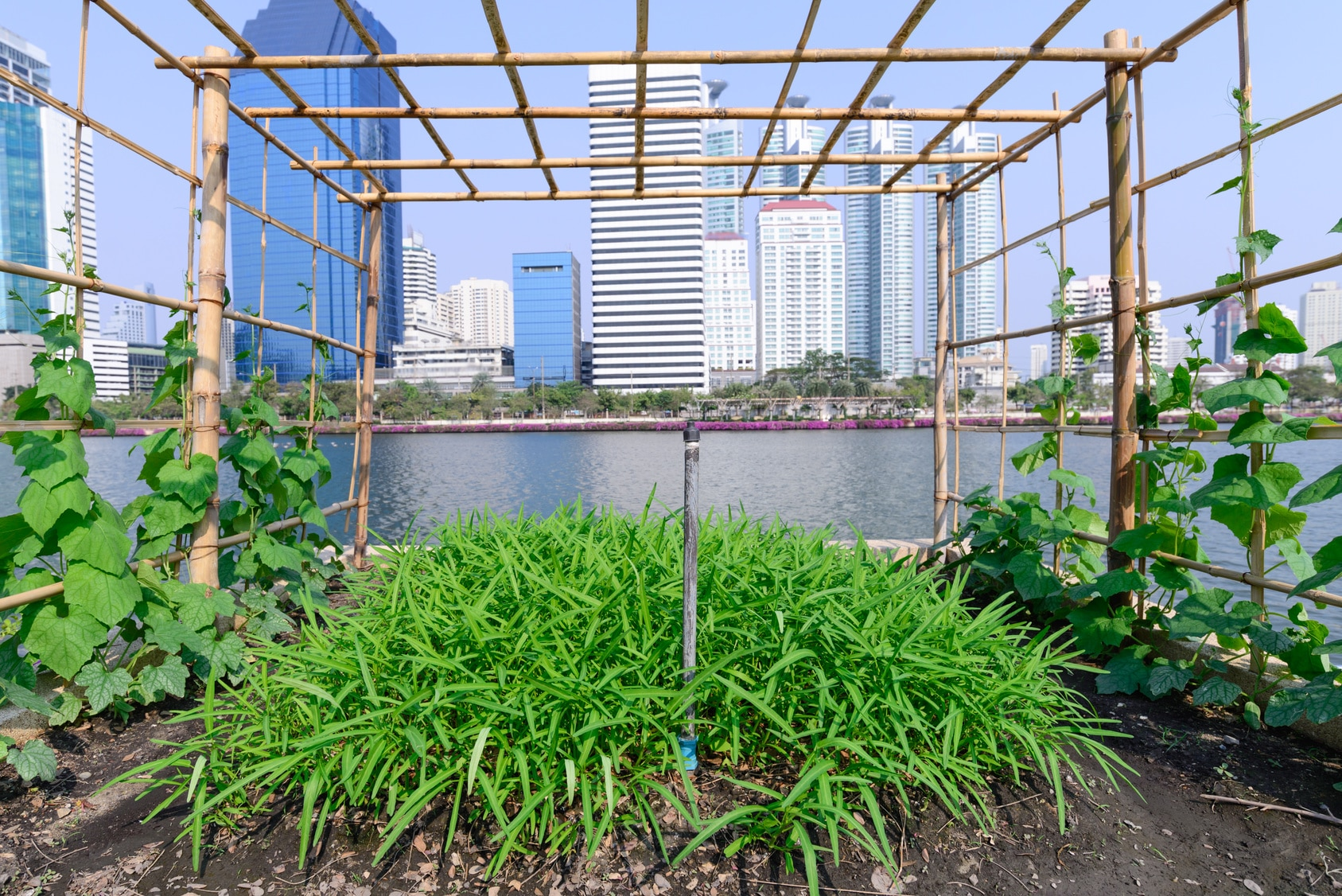 Vegetable plantation in urban garden.