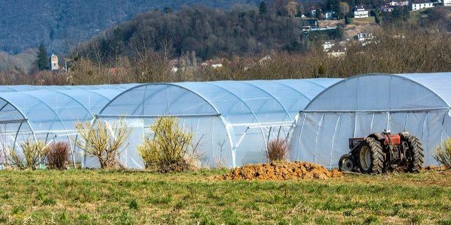 env_andiers_pepiniere-agriculture_ee (17)Pt